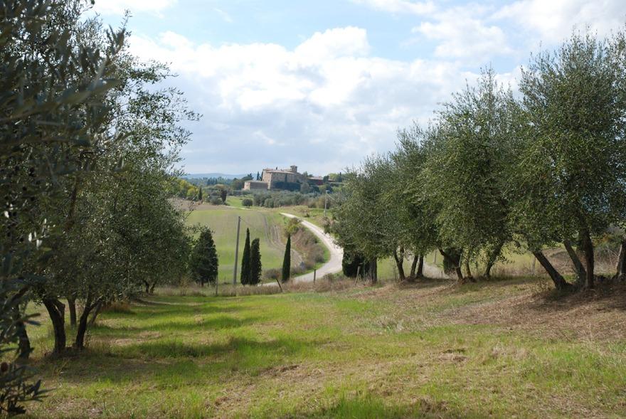 il mandorlo olive grove
